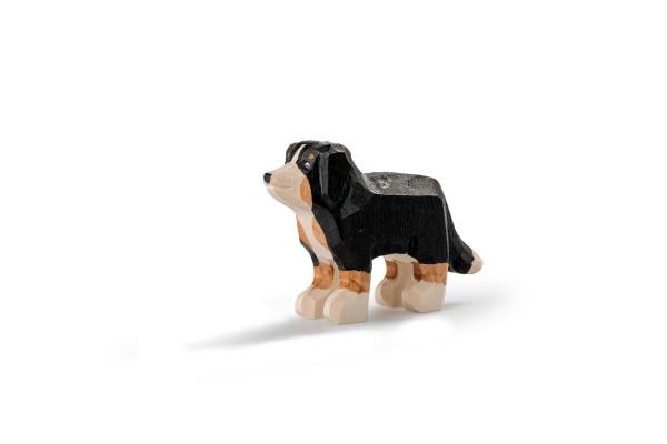 TRAUFFER Appenzeller Sennenhund